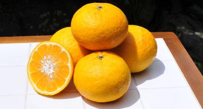 サイズも比較的大きい柑橘ですのでボール代わりに最適・・・だったのかも?