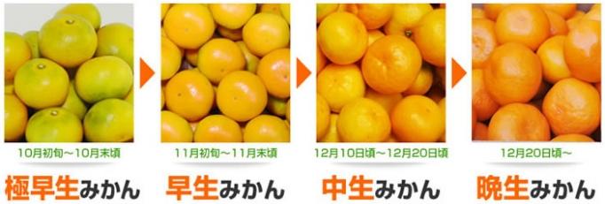 時期によって味はもちろん、色も異なります。