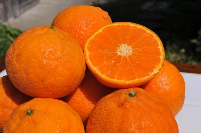 色味も晩生みかんとすごく良く似た濃い橙色