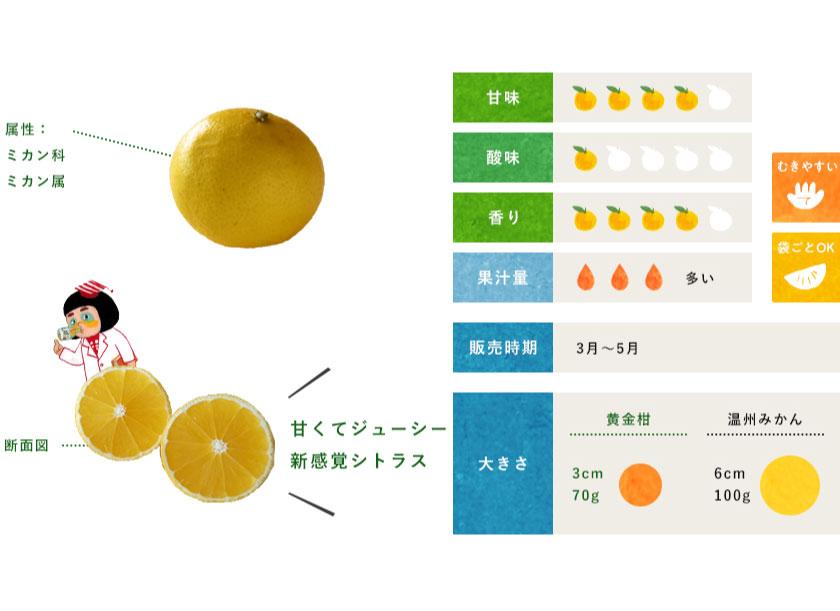 黄金柑(おうごんかん)
