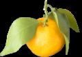 橘(たちばな)